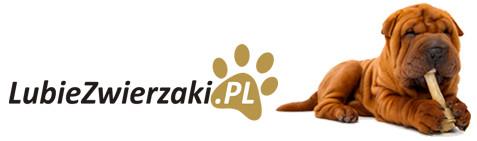 logo-RB NOWA Barbara Klimek